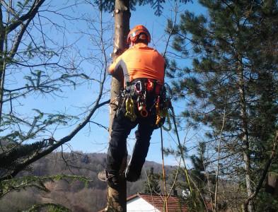Baumfällen 1